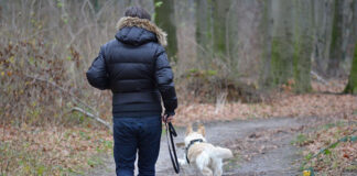 Czym cechuje się nowoczesny pastuch dla psa
